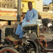 Luxor Carriage Drivers Blame Revolution for No Business